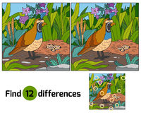 Find differences  Royalty Free Stock Photo