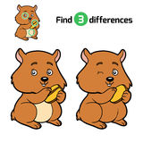Find differences, Hamster Stock Photography