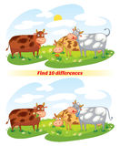 Find 10 differences. A herd of cows grazing in the meadow. Funny cartoon character. Vector illustration.  on white background Royalty Free Stock Image