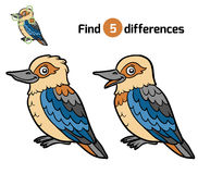 Find differences, Kookaburra Stock Photos