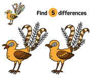 Find differences, Lyrebird. Find differences, education game for children, Lyrebird Royalty Free Stock Photo