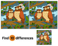 Find Differences (owl) Royalty Free Stock Images