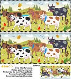 Find the differences picture puzzle - cows. Farm and autumn themed visual puzzle: Find the ten differences between the two pictures of spotted milk cows on a Stock Images