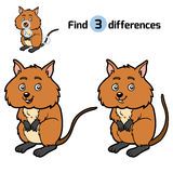 Find differences, Quokka. Find differences, education game for children, Quokka Royalty Free Stock Image