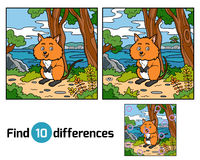 Find differences, Quokka. Find differences education game for children, Quokka Stock Photo