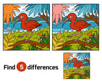 Find differences, Scarlet ibis. Find differences education game for children, Scarlet ibis Royalty Free Stock Image
