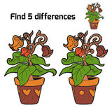 Find five differences (flowers). Find 5 differences (flowers in pot Royalty Free Stock Photography