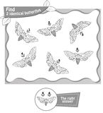 Find 2 identical butterflies black. Visual game, coloring book for children and adults. Task to find 2 identical butterflies . black and white  illustration Royalty Free Stock Photography