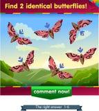 Find 2 identical butterflies Stock Photo