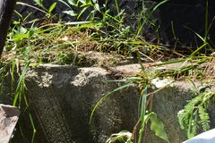 Find the Lizard. Lizard whiling away its time on a cement fence. sunny afternoon in lekki, lagos, Nigeria Royalty Free Stock Photography
