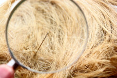 Find a Needle in the haystack. Magnification glass, needle and haystack composition Royalty Free Stock Image