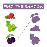 Find the right shade of fruit. Drain the gooseberries . Set to find the correct shadow matching educational game of the child to compare and connect objects Stock Photo