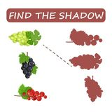 Find the right shade of fruit. Kiwi with grapes and persimmon . Find the right shade of fruit. Currants and grapes . Set to find the correct shadow matching Royalty Free Stock Photo