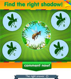 Find right shadow bee. Visual game for children and adults. Task the find right shadow bee Stock Photos