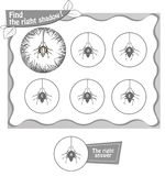 Find right shadow spiderbv. Visual game for children and adults. Task the find right shadow spider. black and white  illustration Stock Photography