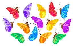 Find a second wing for a butterfly Royalty Free Stock Images