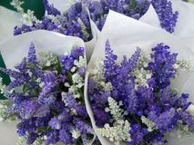 Bouquets of Purple and violet flowers. Find some bouquets of Purple flowers at the Union Square farmers Market in NYC Royalty Free Stock Photo