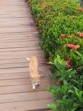 Find someone. A cat walk around Stock Image