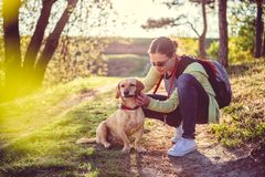 Find a tick on a dog. Woman picking a tick on dog fur Stock Images