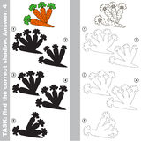 Find true correct shadow, the educational kid game. Carrots with different shadows to find the correct one, compare and connect object with it true shadow, the Royalty Free Stock Photos