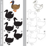 Find true correct shadow, the educational kid game. Duck with different shadows to find the correct one, compare and connect object with it true shadow, the Stock Photography