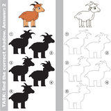 Find true correct shadow, the educational kid game. Horn Goat with different shadows to find the correct one, compare and connect object with it true shadow Royalty Free Stock Image