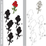 Find true correct shadow, the educational kid game. Red Rose Bouquet with different shadows to find the correct one, compare and connect object with it true Royalty Free Stock Photography