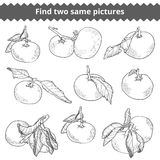 Find two same pictures. Vector black and white set of mandarines Royalty Free Stock Photo