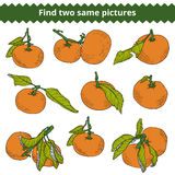 Find two same pictures. Vector color set of mandarines Royalty Free Stock Photo