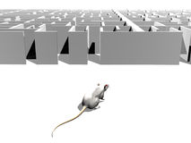 Find the way out of the maze. 3d maze in perspective with a mouse approaching the entrance, on white isolated background Royalty Free Stock Images