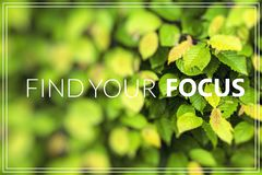 Find Your Focus green leaf background Stock Image