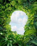 Find Your Way. Out from the dark danger of the jungle of uncertainty and confusion with rain forest plants in the shape of a human head leading to an open sky Stock Image
