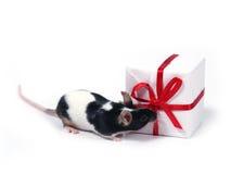Finden eines Geschenkes Stockfoto