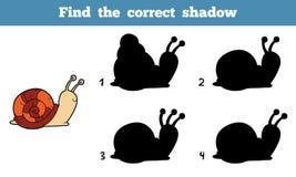 Finden Sie den korrekten Schatten (Schnecke) Stockfotos