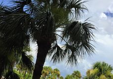Finden Sie mich unter den Palmen Stockfotos