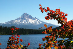 Finding Autumn at Lost Lake. Autumn leaves in the foreground at Lost Lake, Oregon with Mt Hood in the background Stock Image