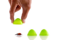 Finding the Bug. In a Memory Game stock photography
