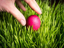 Finding an Easter Egg Royalty Free Stock Image
