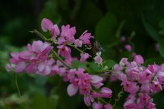 Finding nectar. A bee is looking for nectar in flowers Royalty Free Stock Photo