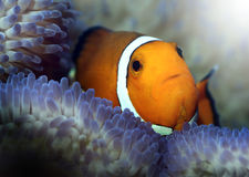 Finding nemo Stock Photography