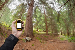 Finding the right position in the forest via gps Royalty Free Stock Images