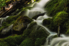 Finding It's Way Through the Moss. Slow motion waterfall running over moss in the Wasatch national forest in Utah USA Royalty Free Stock Photo