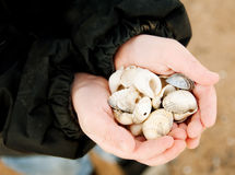 Finding Sea Shells Stock Images