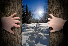 Finding the Way. Hands of a man grasp two trees, as he discovers the path out of the woods stock photos