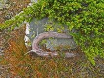 Fine alpina della vegetazione della montagna sulle strutture e sull'erba di pinus mugo della pianta del fondo Immagini Stock Libere da Diritti