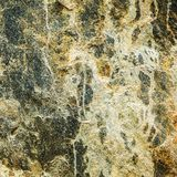 Fine alta o macro di una parete rocciosa Fotografia Stock Libera da Diritti