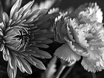 Fine Art Black and White Flowers. Beautiful photograph of two flowers that were part of an Easter bouquet. Grainy shot stock photo
