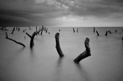 Fine art black & white image of falling tree at the beach in Tumpat, Kelantan Malaysia. Soft focus due to long exposure. Fine art black & white image of falling stock images