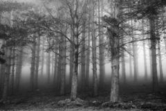 Fine Art, Black and White scene in the woods
