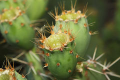 Fine Art Cactus Royalty Free Stock Photos